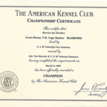 Certificate Archive   Reidsan Throughout Certificate Of Championship
