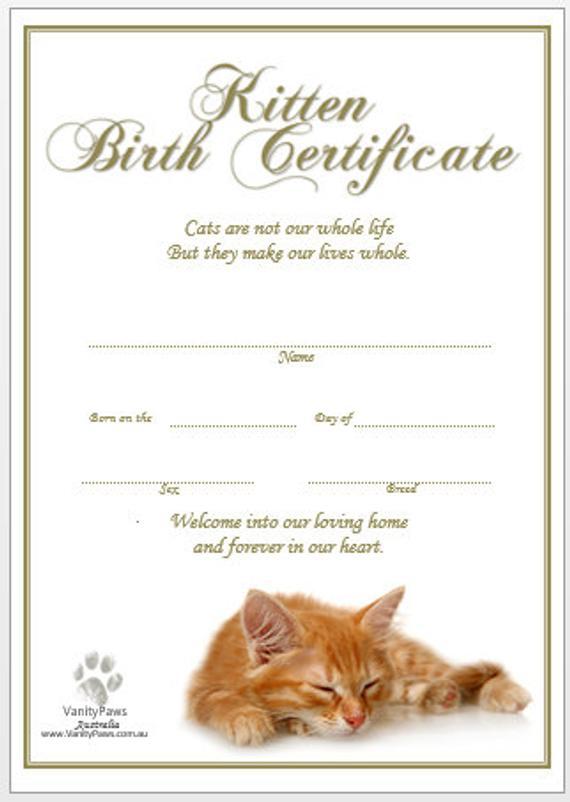 Kitten Birth Certificate - Ginger (Instant Download) within Kitten Birth Certificate Template
