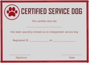 Service Dog Training Certificates Template | Certificate regarding Service Dog Certificate Template