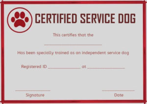 Service Dog Training Certificates Template | Certificate throughout Dog Training Certificate Template Free 10 Best