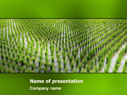 Rice Paddies Brochure Template Design And Layout, Download within Fresh Agriculture Business Plan Template Free